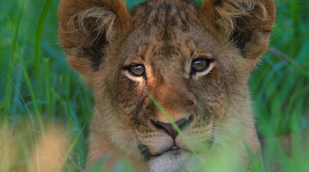 Krüger-Nationalpark welches beinhaltet Zootiere und gefährliche Tiere