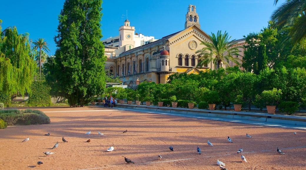 Stadtzentrum von Valencia das einen Vögel, historische Architektur und Kirche oder Kathedrale