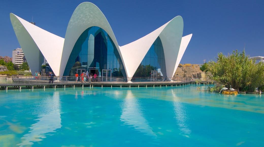 Ciudad de las Artes y de las Ciencias bevat moderne architectuur en een stad