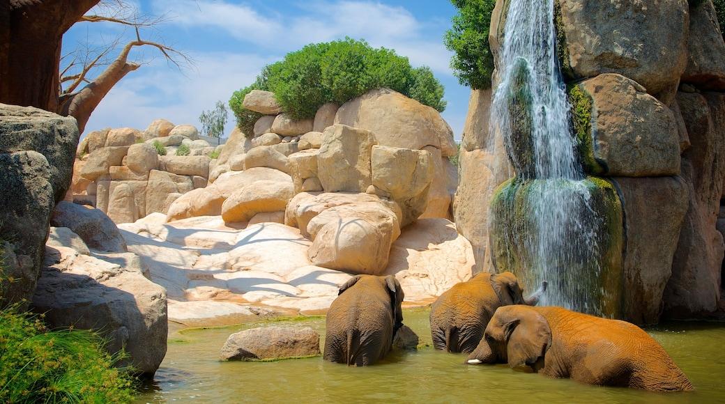 Valencia welches beinhaltet Zootiere, Kaskade und Landtiere