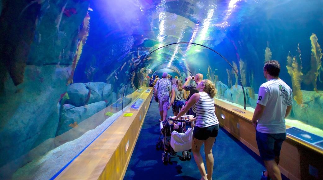 Ciudad de las Artes y de las Ciencias toont interieur en zeedieren en ook een grote groep mensen