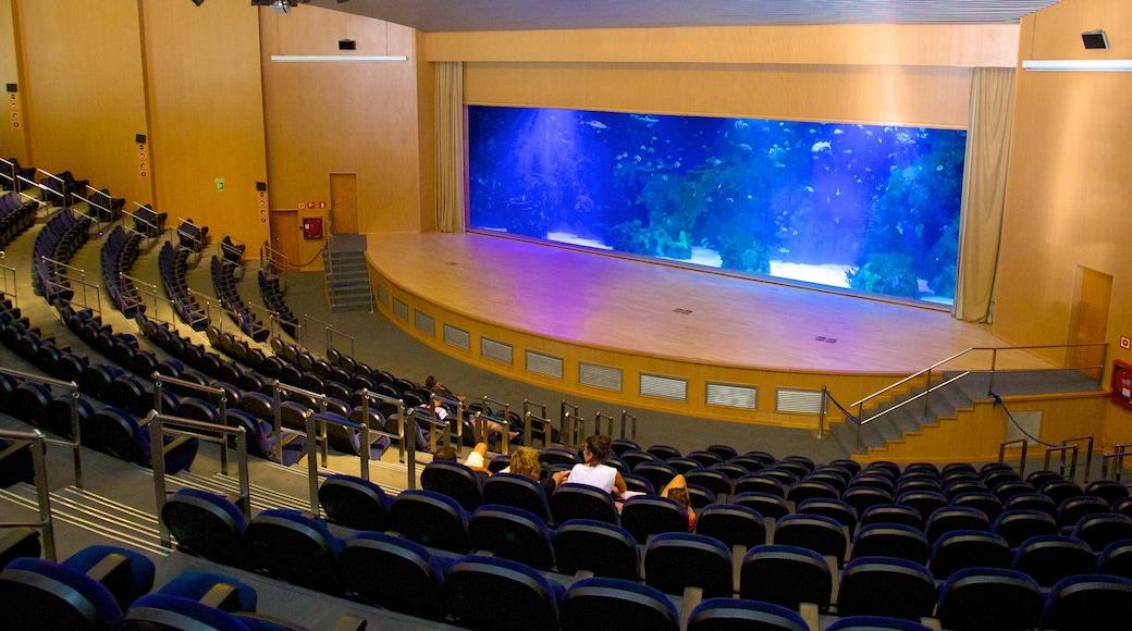 Aquarium L\'Oceanogràfic mit einem Innenansichten und Meeresbewohner