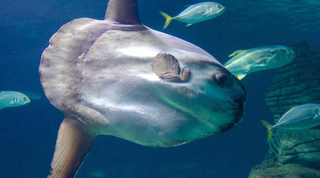 Aquarium L\'Oceanogràfic welches beinhaltet Meeresbewohner