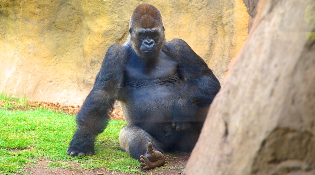 Erlebnis-Zoo Bioparc welches beinhaltet Landtiere und Zootiere