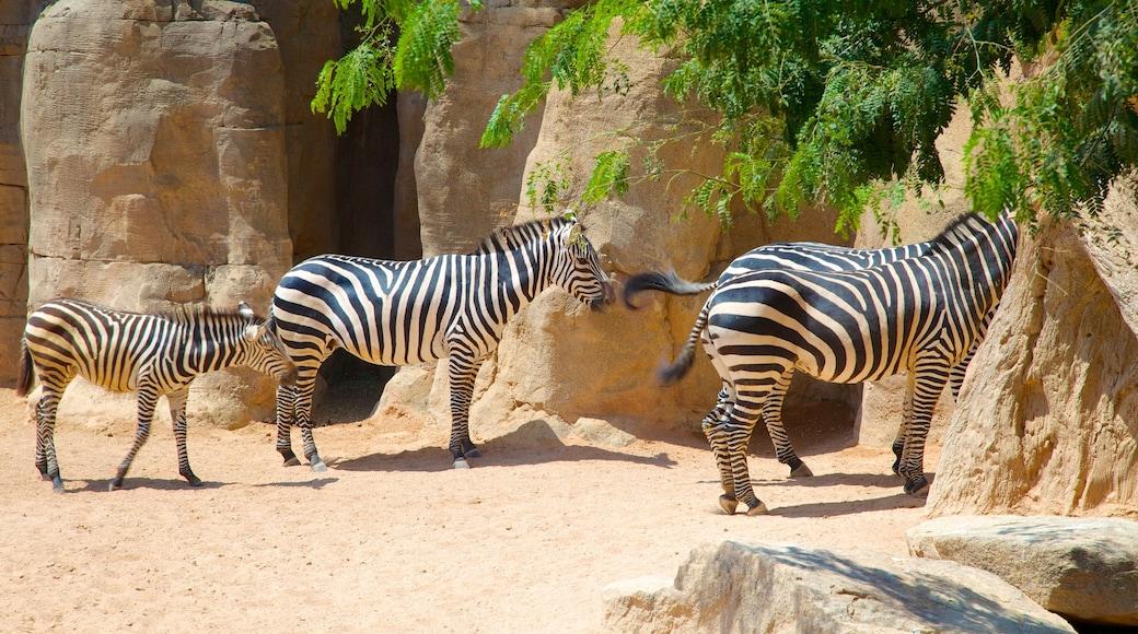 Erlebnis-Zoo Bioparc welches beinhaltet Zootiere und Landtiere