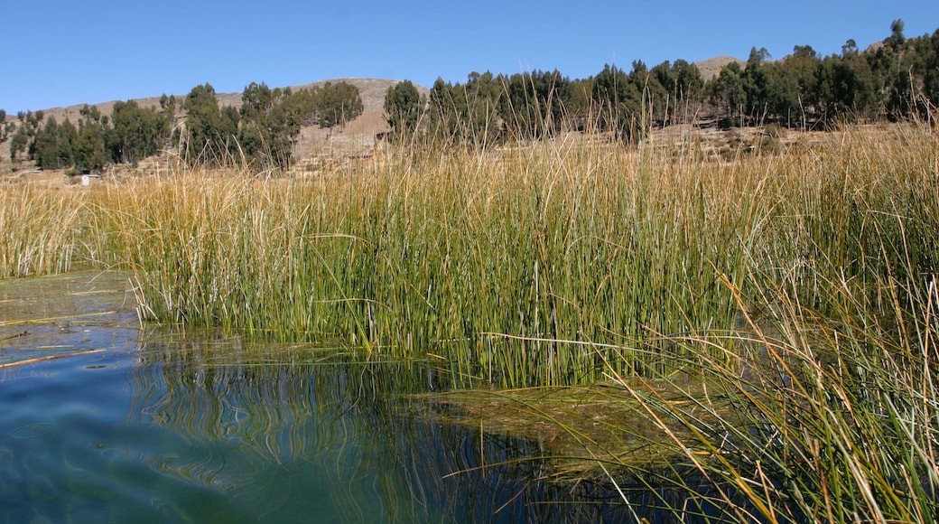 Lake Titicaca - Puno featuring a lake or waterhole, tranquil scenes and wetlands