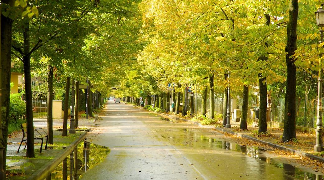 Lac Massaciuccoli mettant en vedette parc et scènes de rue