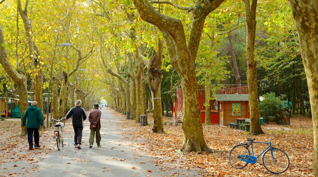 Pineta di Ponente che include parco, bicicletta e foglie d\'autunno
