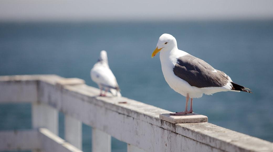 Santa Cruz mettant en vedette vie des oiseaux