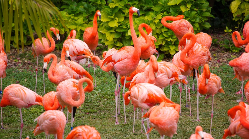 Jungle Island which includes bird life and zoo animals