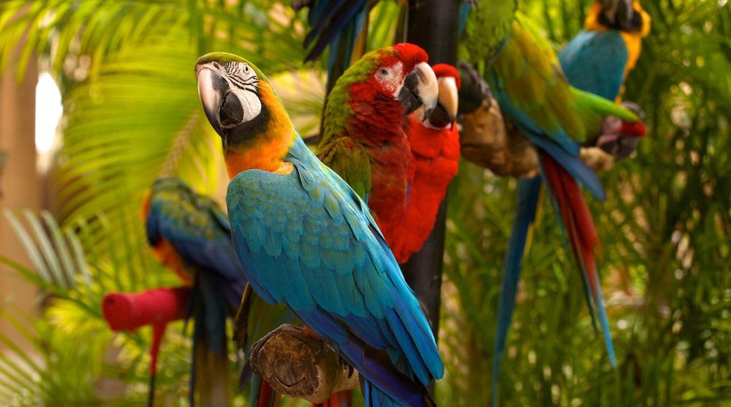 Jungle Island showing bird life and zoo animals