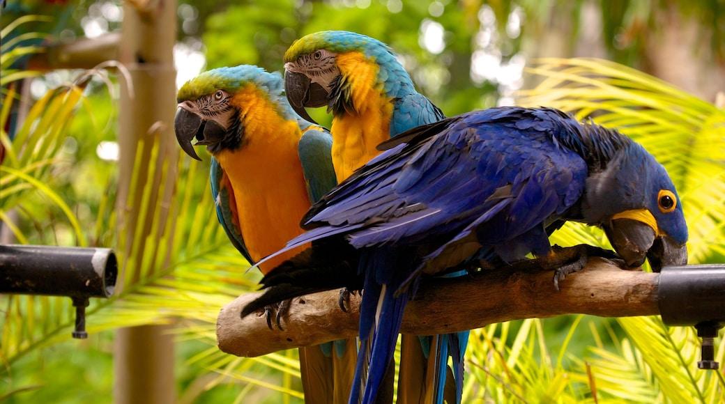 Jungle Island showing zoo animals and bird life