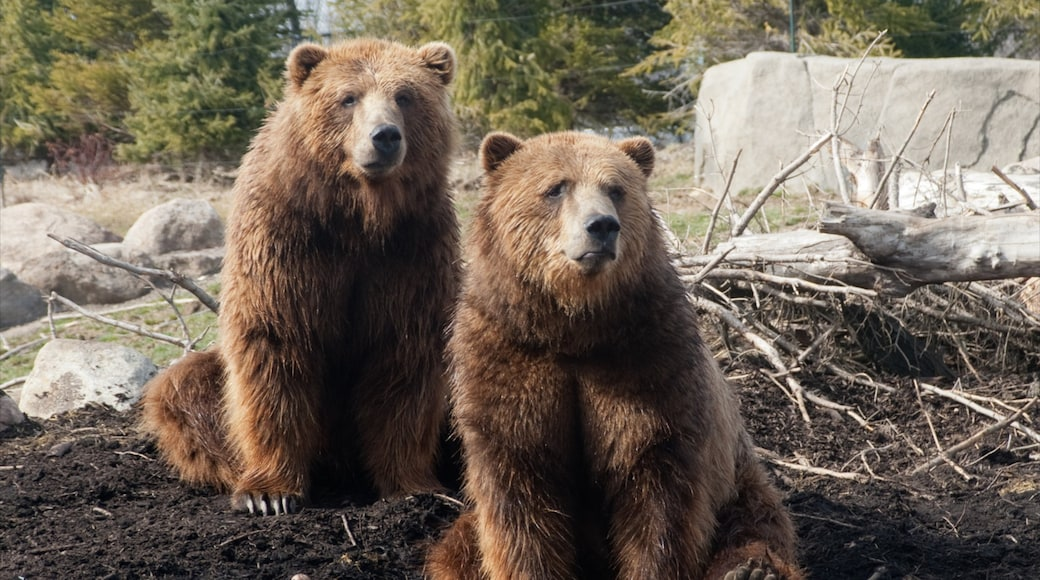 Columbus Zoo and Aquarium ofreciendo animales peligrosos y animales del zoológico