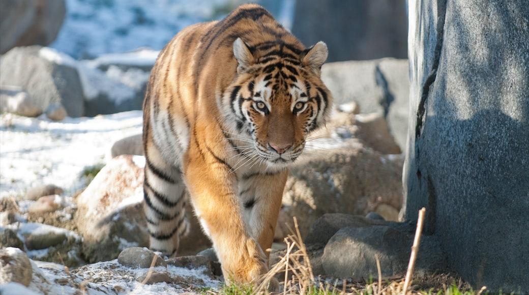 Columbus Zoo and Aquarium que inclui animais de zoológico e animais perigosos