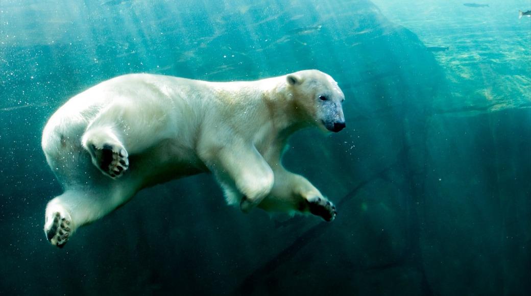 Columbus Zoo and Aquarium que incluye animales del zoológico, vida marina y animales peligrosos