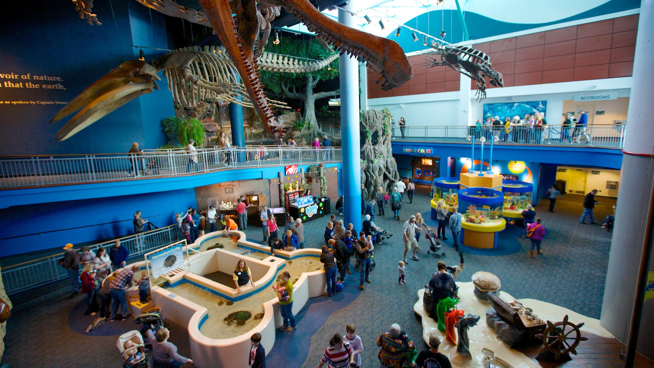 From sharks and stingrays, to penguins and octopus, get close to a colorful collection of tropical sea creatures at this walk-through aquarium.