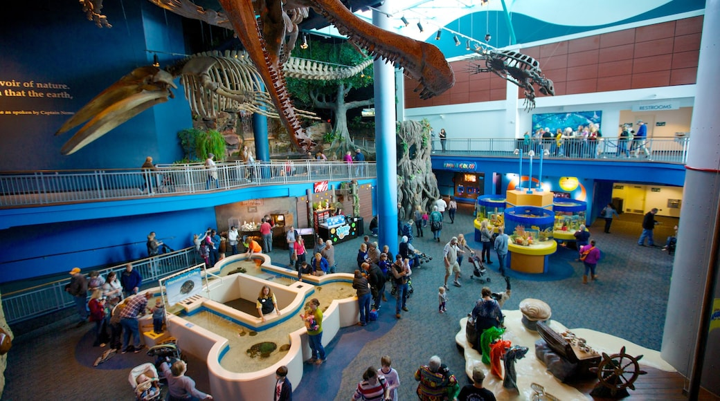 Ripley\'s Aquarium of the Smokies which includes interior views and marine life as well as a large group of people