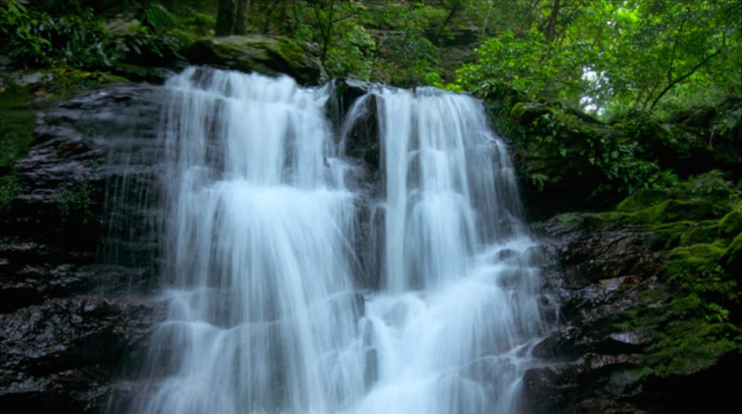 沖繩 呈现出 熱帶雨林 和 瀑布