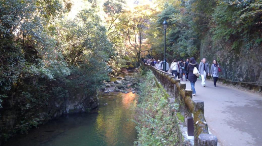 箕面市 其中包括 熱帶雨林 和 河流或小溪