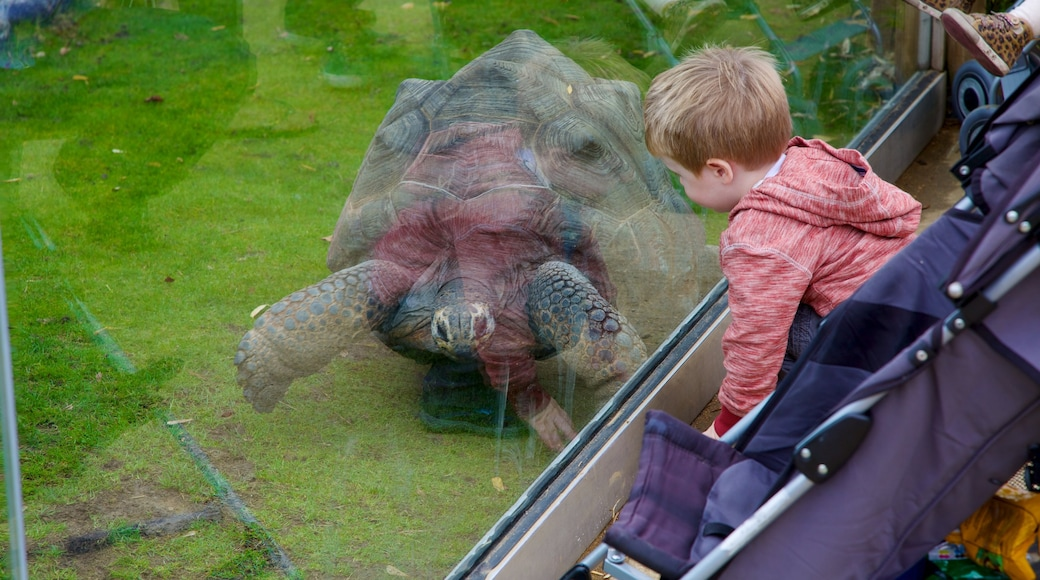 Colchester Zoo mit einem Zootiere und Tiere sowie einzelnes Kind