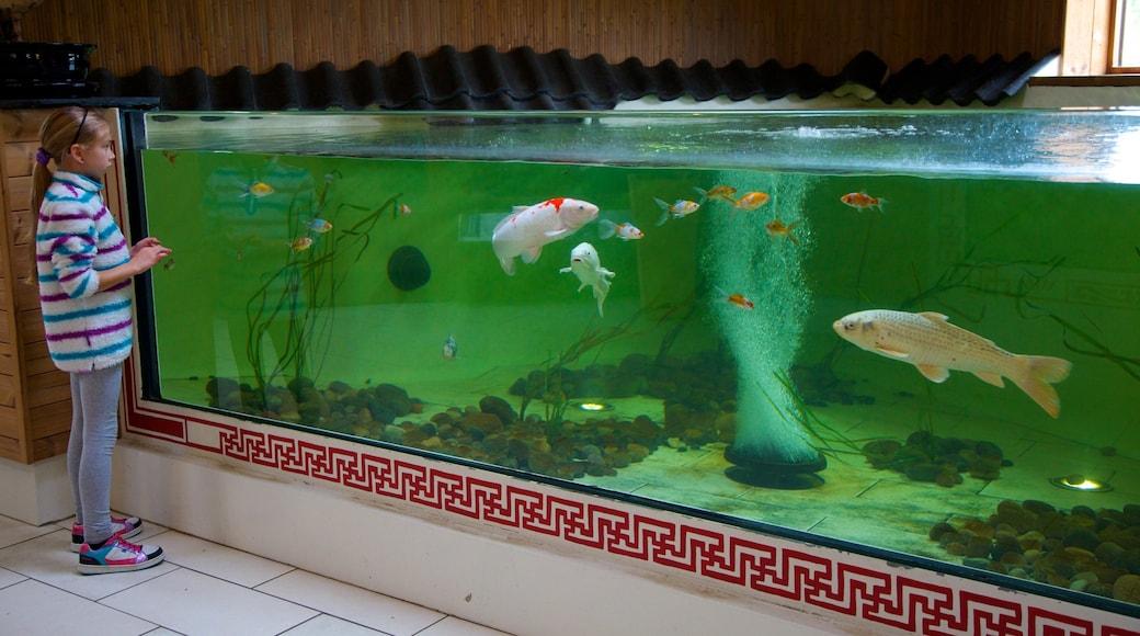 Colchester Zoo welches beinhaltet Zootiere und Meeresbewohner sowie einzelnes Kind