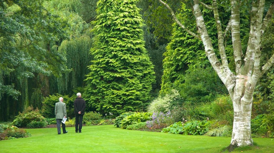 Beth Chatto Garden montrant parc et scènes forestières
