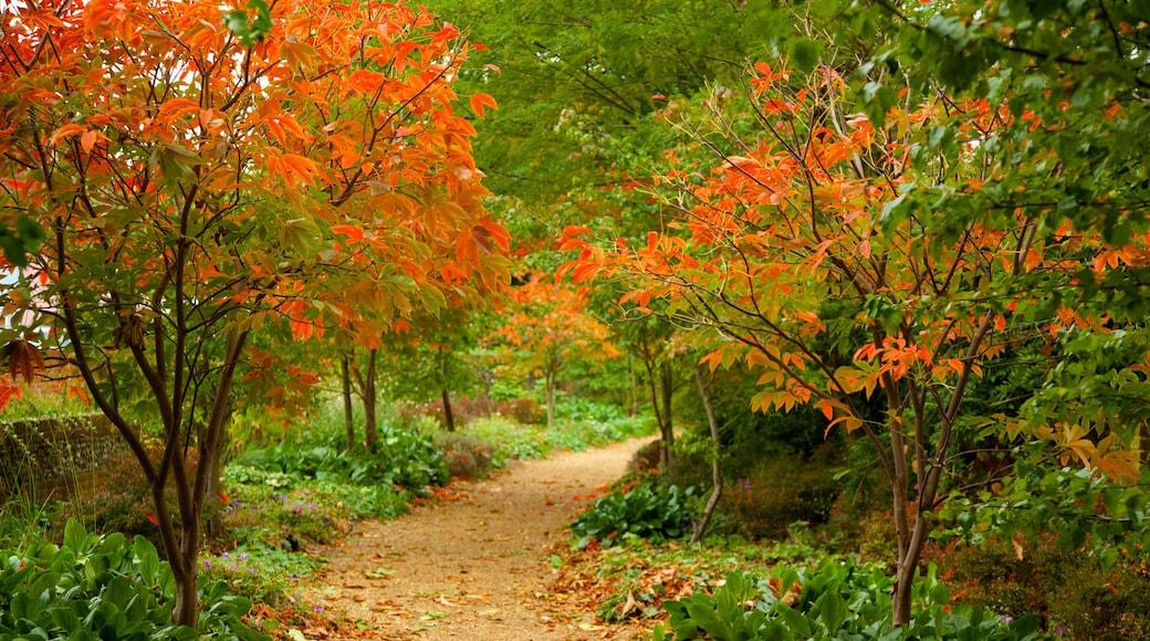 Bridge End Gardens montrant jardin et feuilles d\'automne