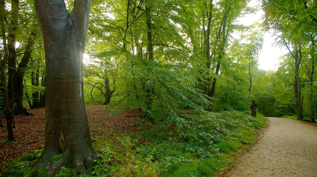 Epping Forest which includes forest scenes