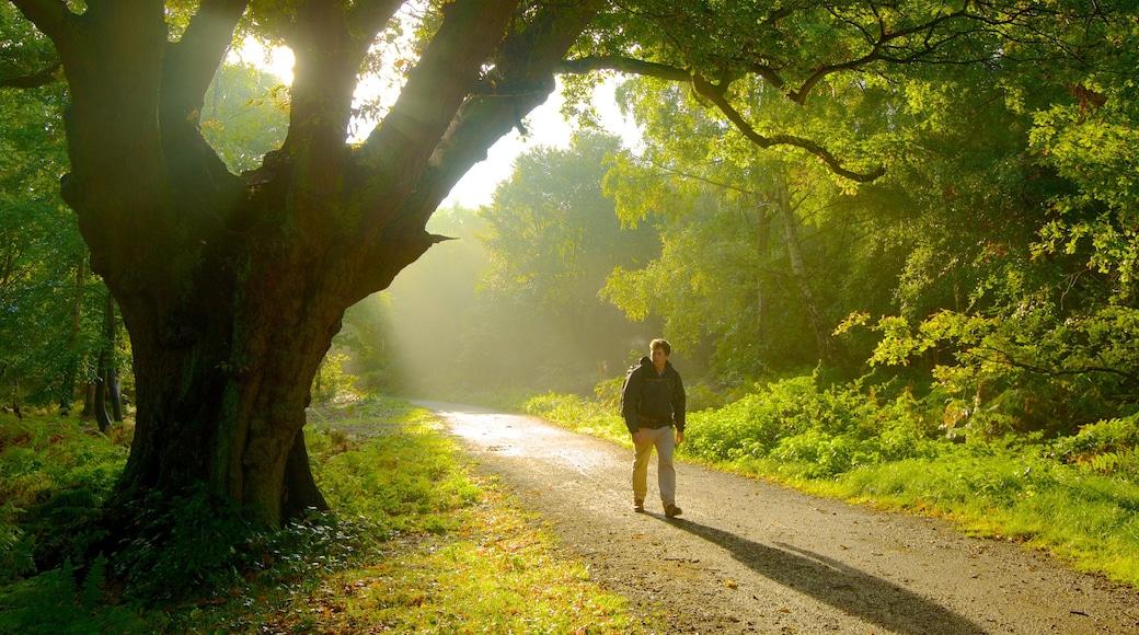Epping Forest caracterizando paisagem, um jardim e escalada ou caminhada