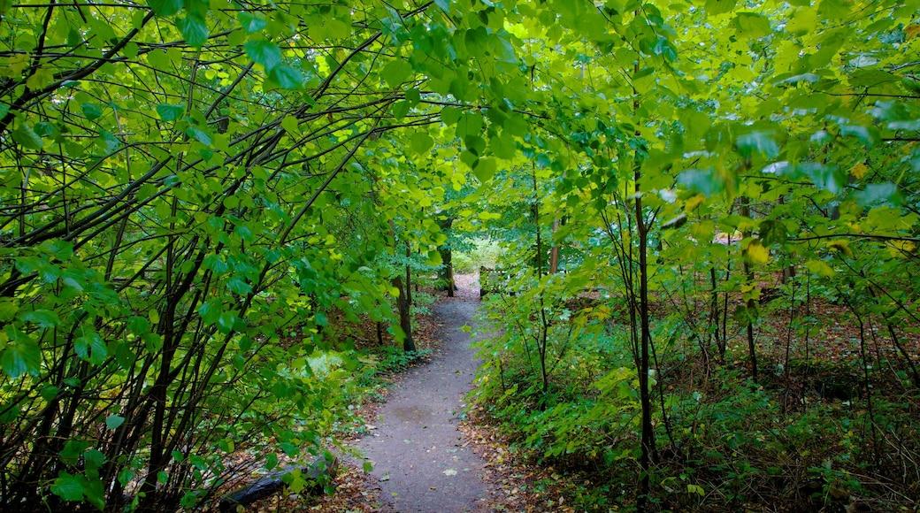 Epping Forest mostrando cenas de floresta