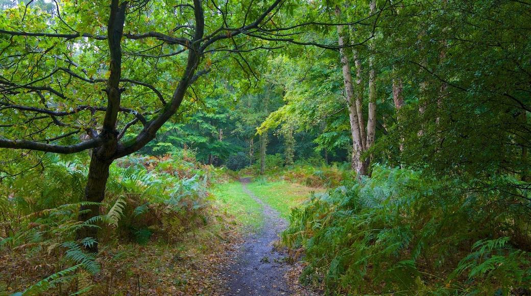 Epping Forest que inclui cenas de floresta e folhas de outono