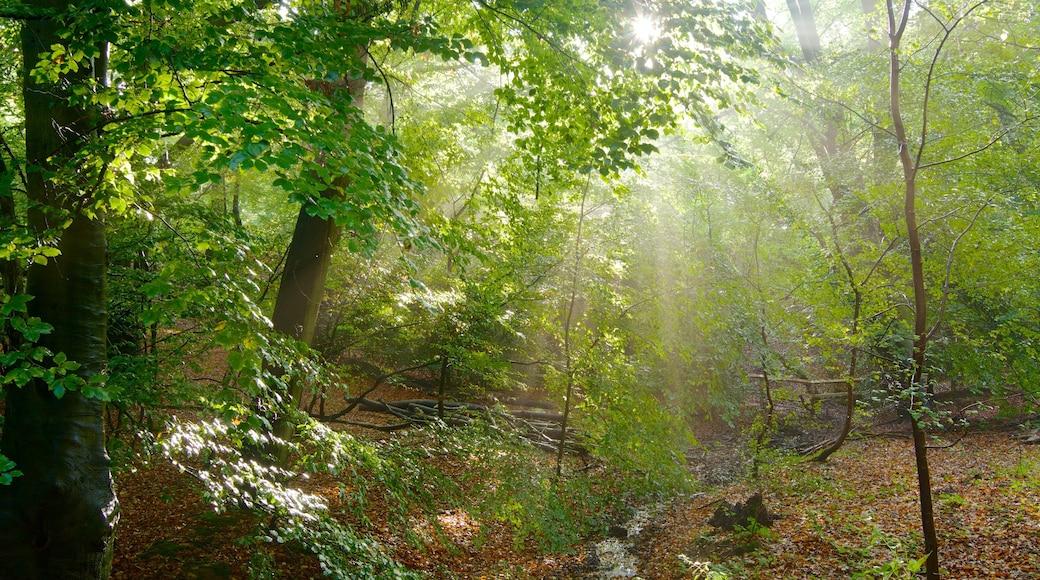 Epping Forest mostrando florestas e cores do outono