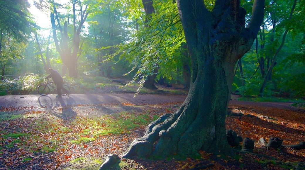 Epping Forest mostrando folhas de outono, cenas de floresta e ciclismo