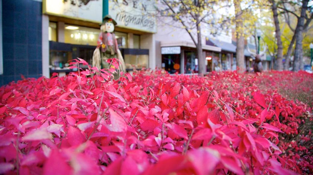 Twin Falls welches beinhaltet Blumen und Kleinstadt oder Dorf
