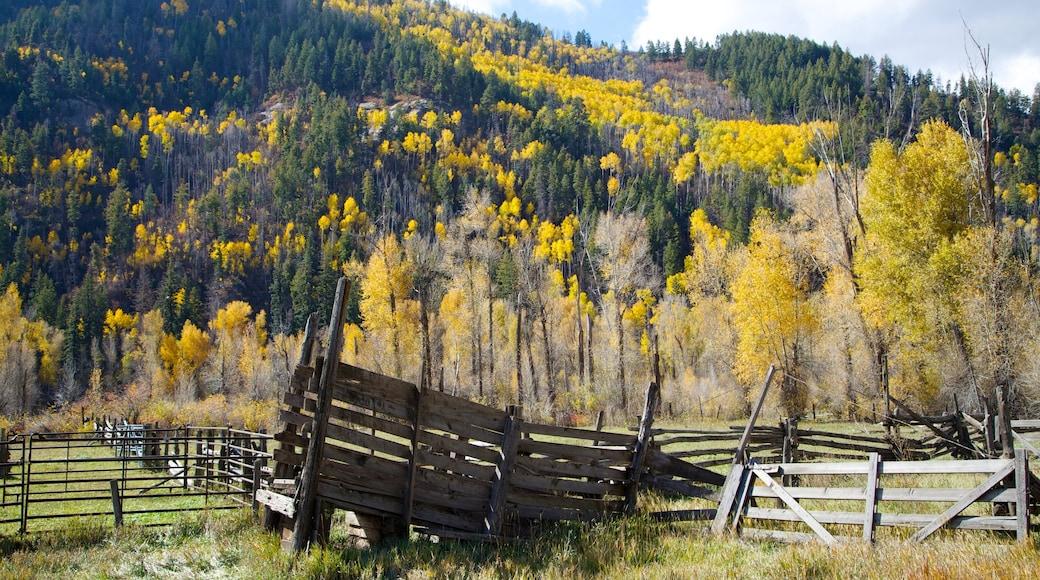 Durango - Purgatory ofreciendo colores de otoño, imágenes de bosques y escenas tranquilas