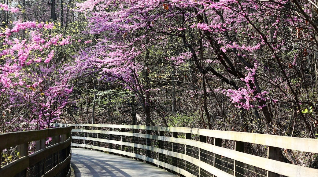 Charlottesville showing flowers, wild flowers and forests