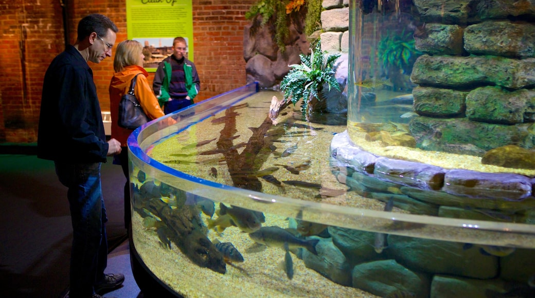 Greater Cleveland Aquarium which includes marine life and interior views as well as a small group of people