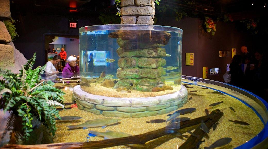 Greater Cleveland Aquarium showing marine life and interior views