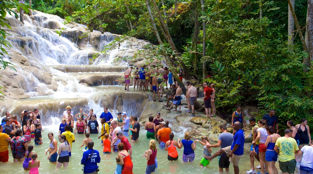 Dunn\'s River Falls showing a waterfall and swimming as well as a large group of people