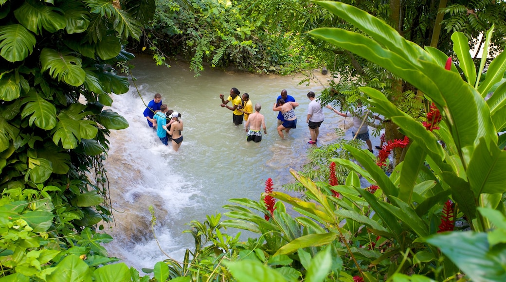 Dunn\'s River Falls which includes a waterfall, tropical scenes and swimming