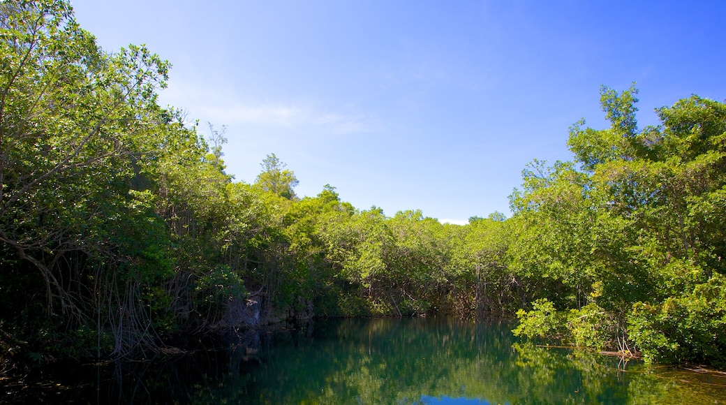 Green Grotto Caves showing a lake or waterhole and forest scenes