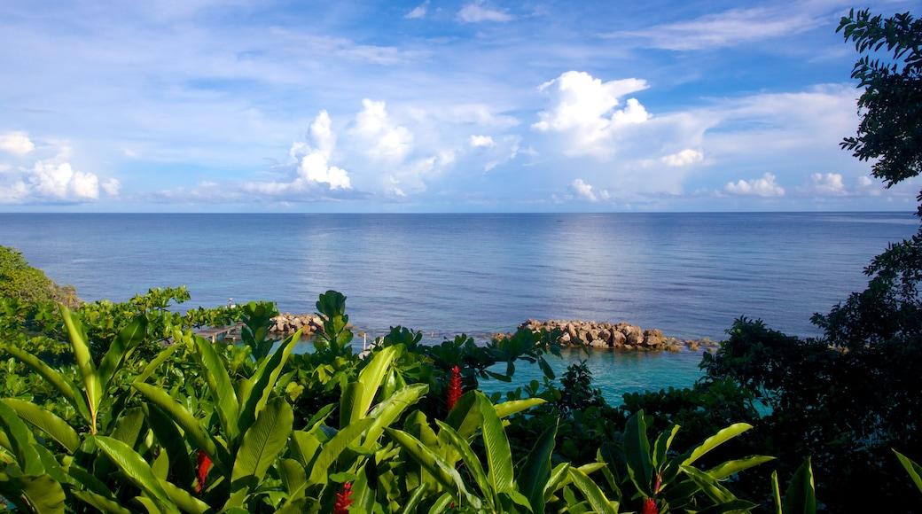 Dolphin Cove qui includes vues littorales et scènes tropicales