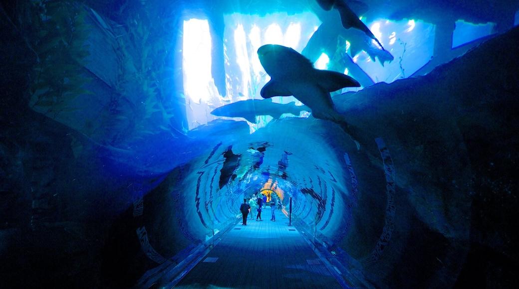 Dubai Mall toont interieur en zeedieren en ook een klein groepje mensen