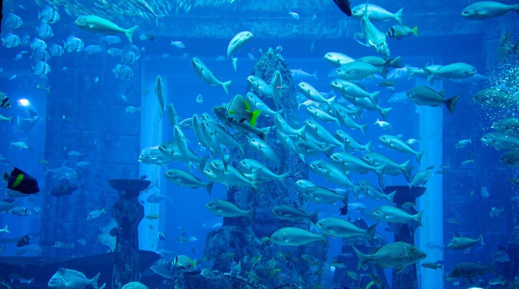 Aquaventure featuring sisäkuvat, vesipuisto ja merielämä