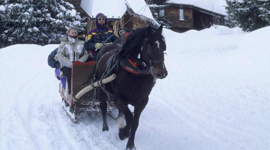 Station de ski Avoriaz qui includes équitation et neige