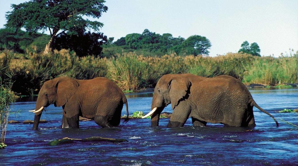 Mpumalanga - Limpopo featuring land animals, a lake or waterhole and zoo animals