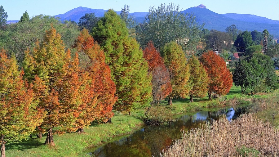 Sabie which includes forest scenes, a river or creek and autumn colours