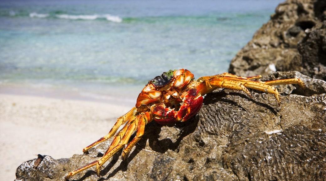 Atiu que incluye una playa de arena y vida marina