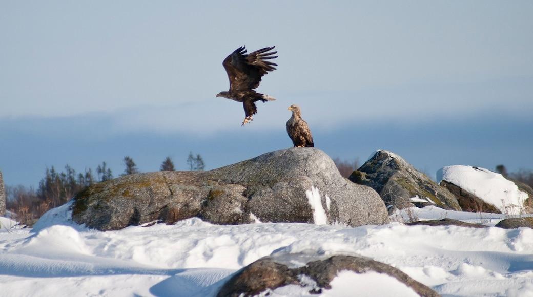 Vaasa featuring bird life and snow