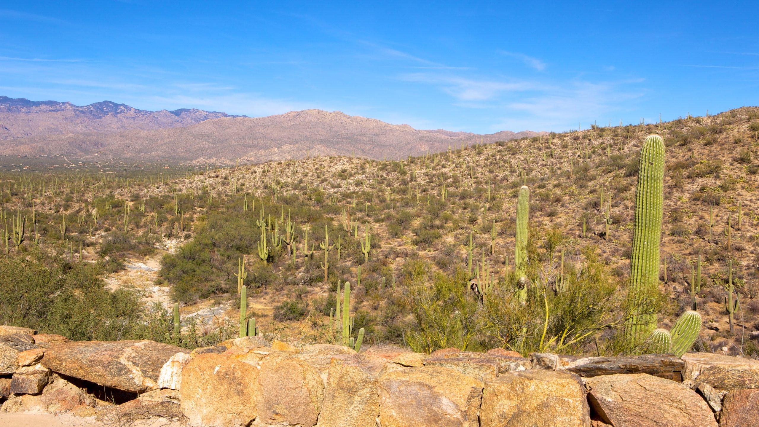 Pima County, Arizona, United States of America